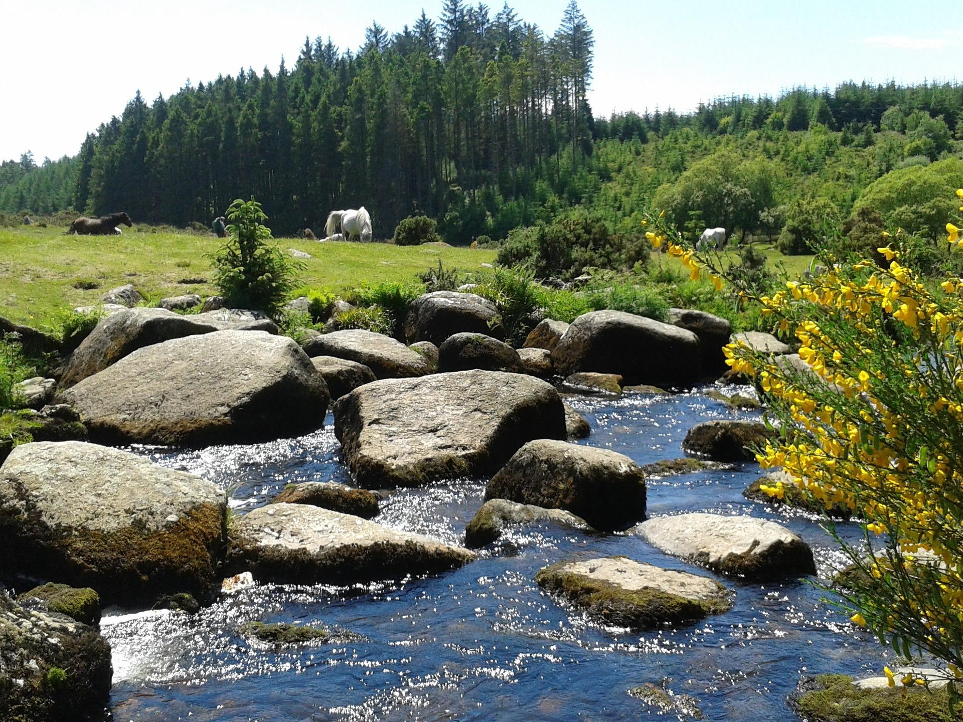 Dartmoor River Stepping Stones
