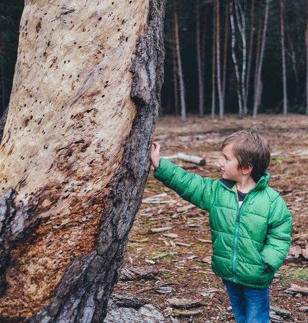 Forest School: Boy with tree